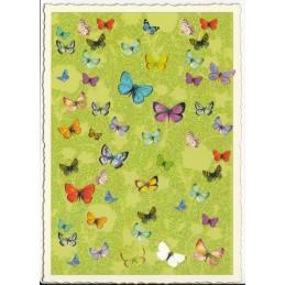 Schmetterlinge - Postkarte
