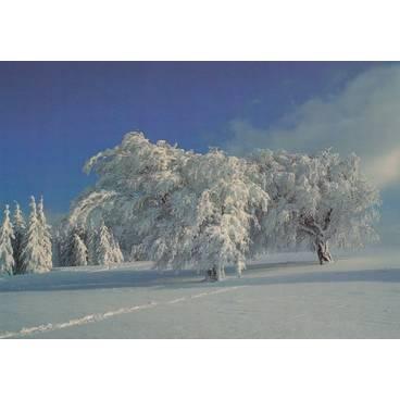 Sauerland - Winterlandschaft - Ansichtskarte