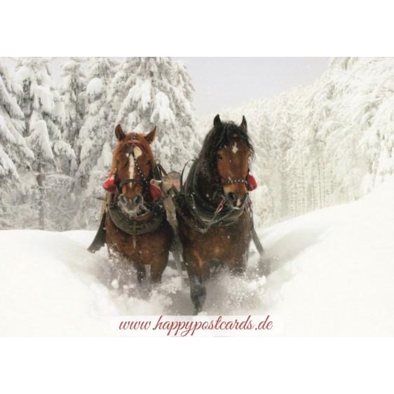 Pferde - Schlittenfahrt - Ansichskarte
