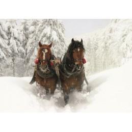 Pferde - Schlittenfahrt - Ansichtskarte