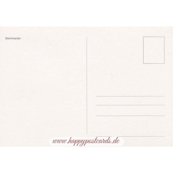 Beech marten - Viewcard