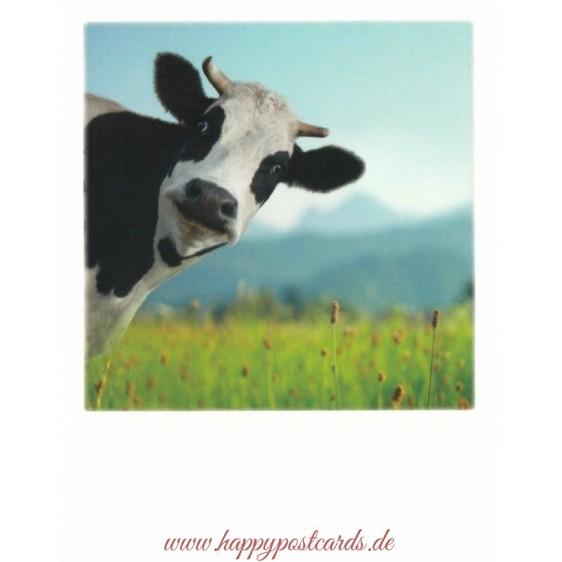 Cow - PolaCard