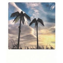 Palmenrausch Antonipark Hamburg - Pickmotion Postkarte