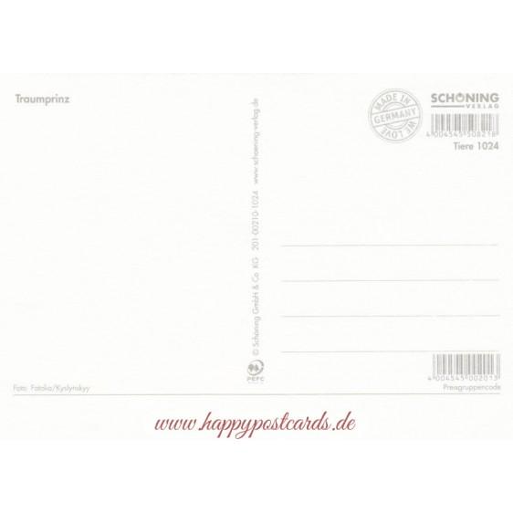 Traumprinz - Ansichtskarte