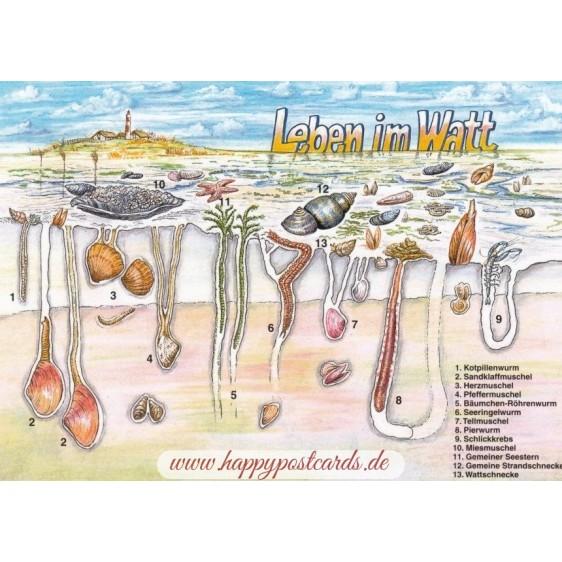Leben im Watt - Ansichtskarte