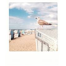 Bird and Beach chair - PolaCard