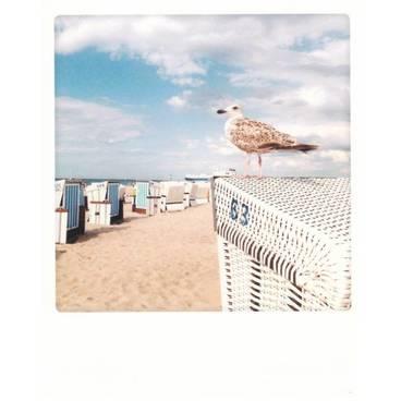 Vogel und Korb - PolaCard
