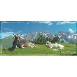 Schönes Allgäu - Kühe und Alpen Panoramakarte