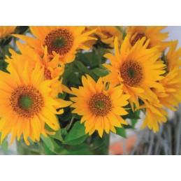 Sonnenblumenstrauß - Postkarte