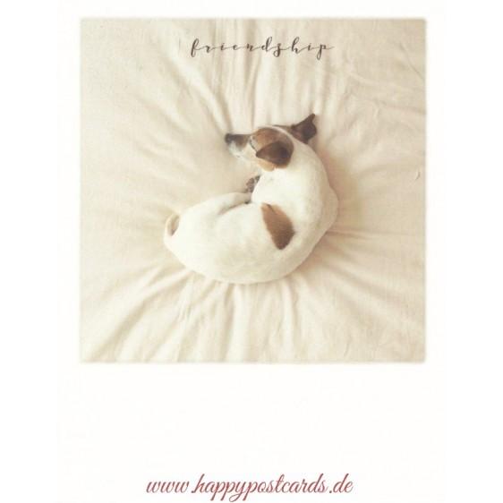 Sleepy Pup - friendship - PolaCard