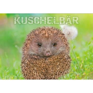 Igel - Kuschelbär - Ansichtskarte