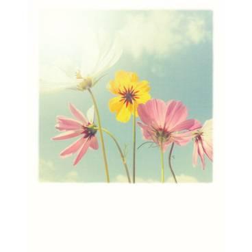 Himmelsblumen