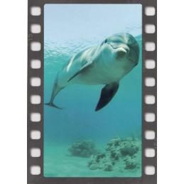 Dolphin - DIA-Postcard