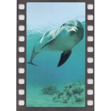 Delphin - DIA-Postkarte