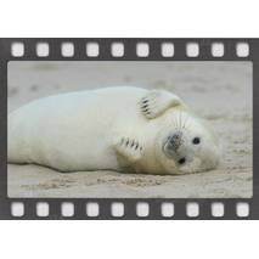 Seal - DIA-Postcard