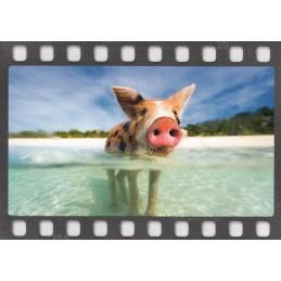 Schwein im Meer - DIA-Postkarte