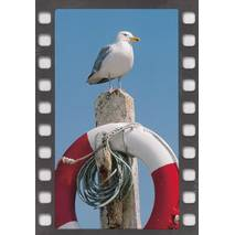 Sea gull - DIA-Postcard