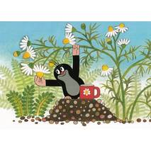 The Mole picking chamomile - Krtek - Postcard