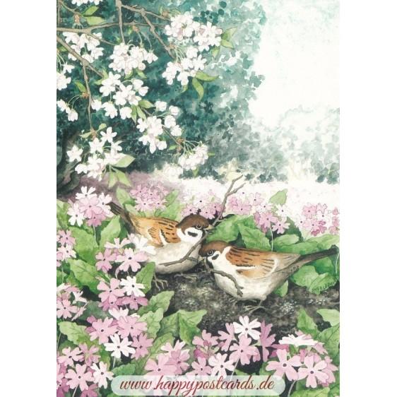103 - Birds in Nest - Postcard
