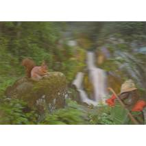 3D Black Forest with squirrel - 3D Postcard