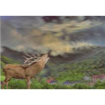 3D Black Forest with deer - 3D Postcard