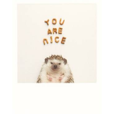 Igel - You are nice - PolaCard