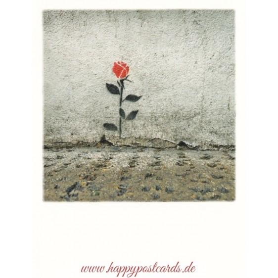 Rose at the wall - PolaCard
