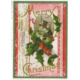 Merry Christmas - Katzenportrait - Tausendschön - Weihnachtspostkarte