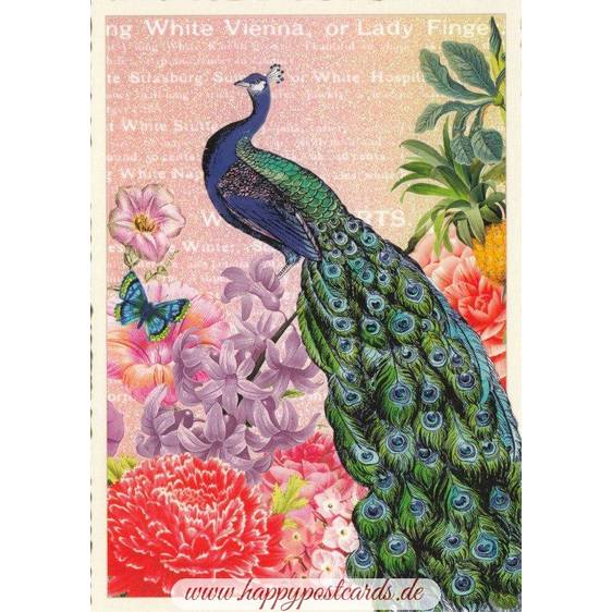Peacock - Tausendschön - Postcard