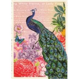 Pfau - Tausendschön - Postkarte