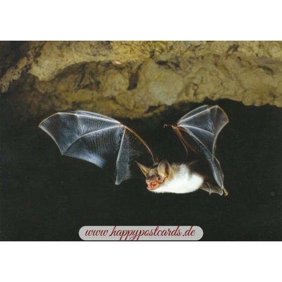 Bat - Viewcard