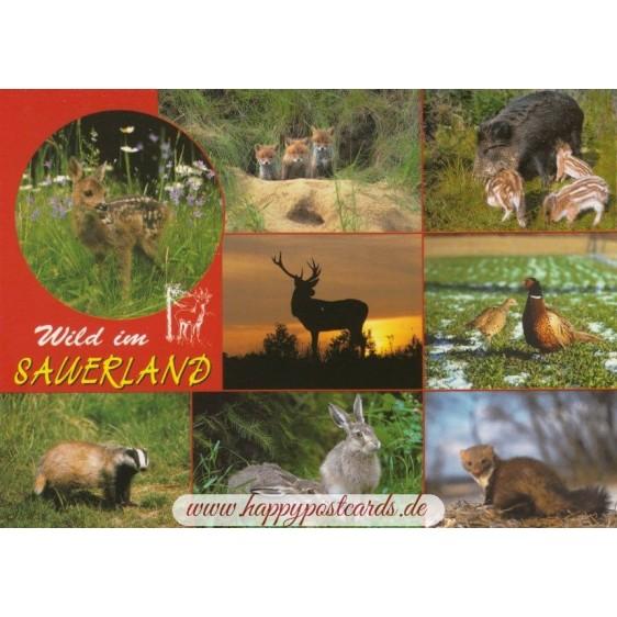 Wild animals from the Sauerland - Viewcard