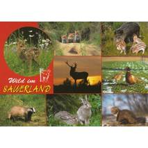 Wild animals from the Sauerland - Viewcard