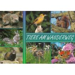 Animals at a trail - Viewcard