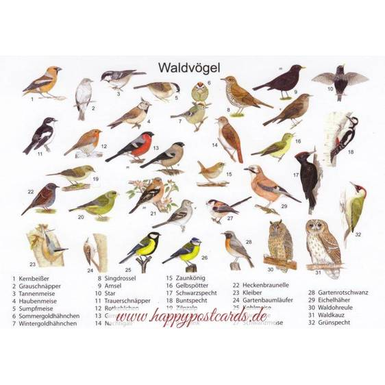 Birds in a forest - Viewcard