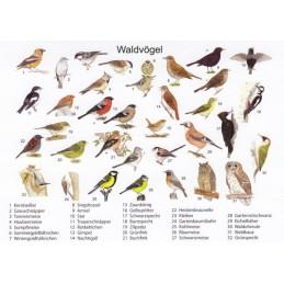 Waldvögel - Ansichtskarte