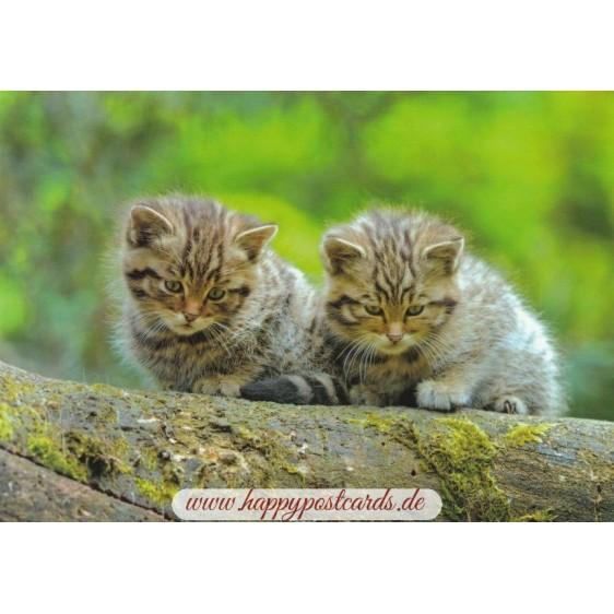 European Wildcat - Viewcard