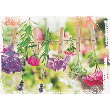Blumen auf der Leine