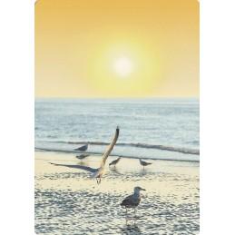 Möwen im Sonnenaufgang - Medley-Postkarte