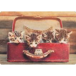 Koffer mit Katzen - Medley-Postkarte