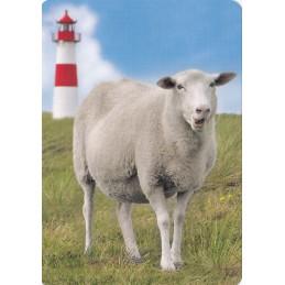 Schaf am Leuchtturm - Medley-Postkarte
