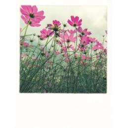 Lawn in spring - PolaCard