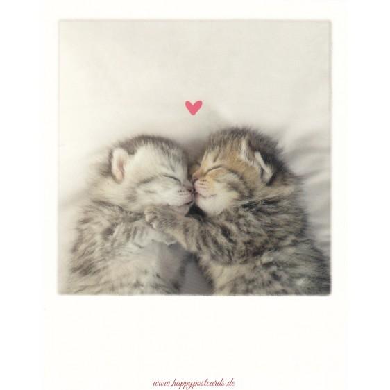 Zwei Kätzchen - PolaCard