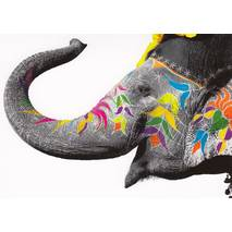Colourfull Elephant - Postcard