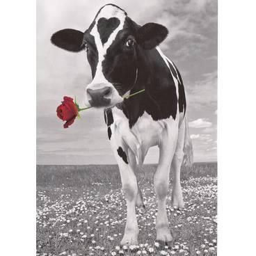 Kuh mit Rose - Kontraste-Postkarte