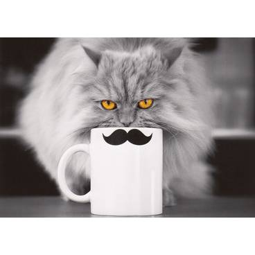 Katze mit Tasse - Kontraste-Postkarte