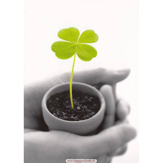 Shamrock in a pot - Contrasts -  Postcard