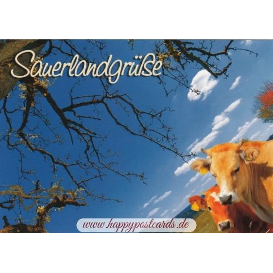 Sauerland - Cows - Viewcard