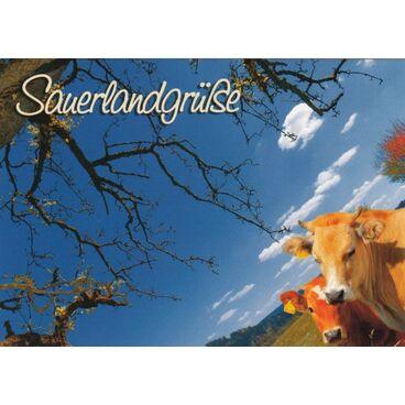 Sauerland - Kühe - Ansichtskarte