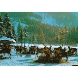 Harz - Feeding of animals - Viewcard